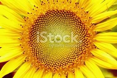 A standard iStock comp image